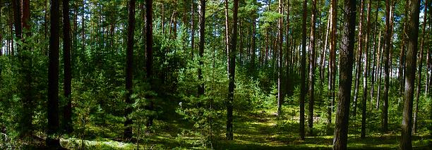 Kokořínsko Forest.png