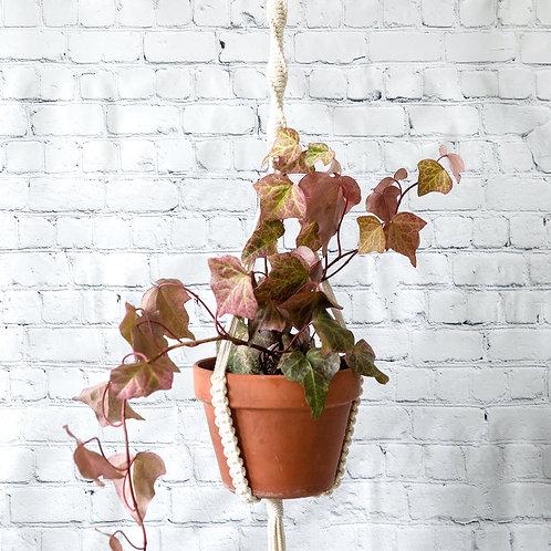 Aloe Macrame Plant Hanger