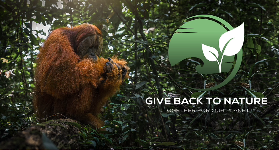 GiveBacktest.heic