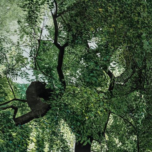 Tree-Portugal