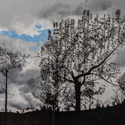 Tree silouette Sri Lanka