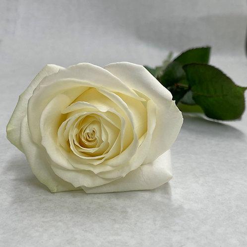 Weisse Rosen 70cm