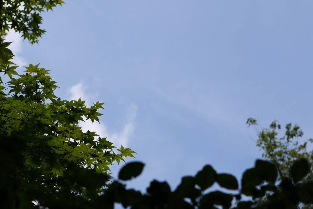 森からの空