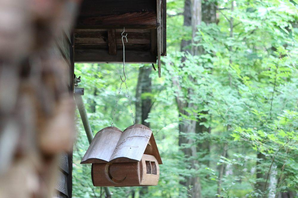 小鳥の集まる森