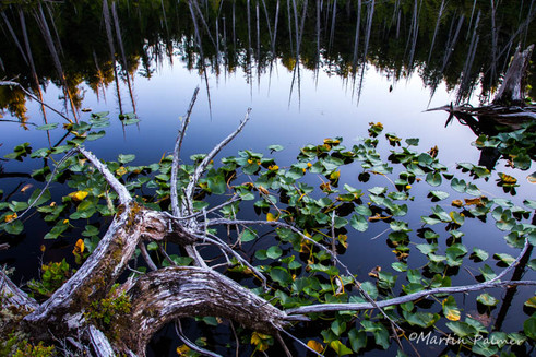 Calm Waters Supporting the Flora...