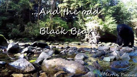 The Great Bear Rain Forest