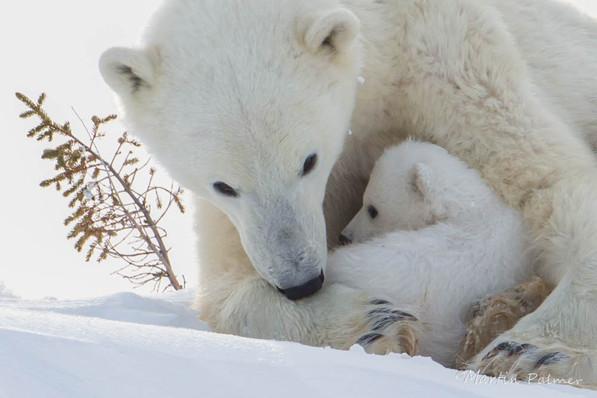 A Motherly Cuddle