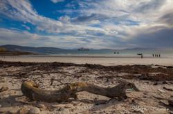 Saunders Island, Falkland Islands