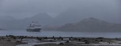 Antarctic Fur Seal Terratory