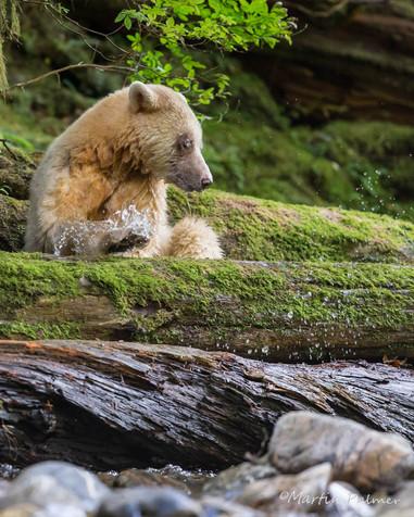 Ma'ha Climbing on a Log