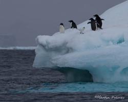 Iceberg Visitors