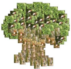 Gila Tree