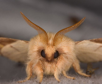 Closeup Of The Face Of A Moth