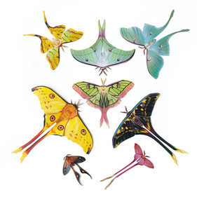 Tailed Moth Types