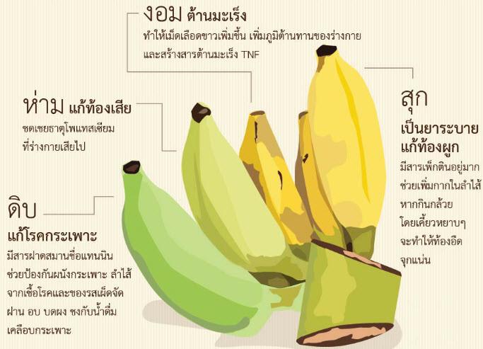 กล้วยเป็นผลไม้อีกชนิดหนึ่งที่คนที่รักสวย รักงาม นิยมรับประทาน เพื่อเป็นการ ควบคุมน้ำหนัก ไม่ให้อ้วน และเหมาะอย่างยิ่งสำหรับผู้ที่ต้องการ ลดน้ำหนัก หรือ ลดความอ้วน โดยการ รับประทานกล้วย ควบคู่กับการ ออกกำลังกาย และรับประทาน Caroline ก็จะช่วยให้การ ลดน้ำหนัก หรือ ลดความอ้วน เห็นผลดีมากๆ นั่นเอง