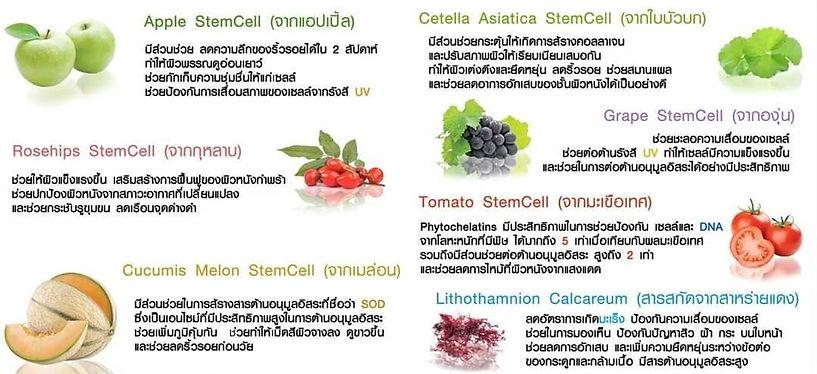 PhytoSC,ผิวขาวใส,สเต็มเซลล์,Phyto SC,ลดจ