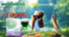 คลอโรฟิลล์,chlorophyll powder,Nutrigen G