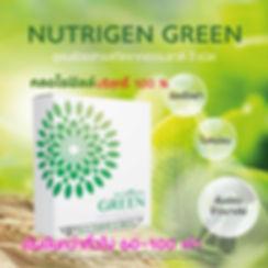 NUTRIGEN GREEN,CHLOROPHYLL POWDER,นูทริเ