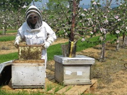 The Health Benefits of Honey - By Rebecca Marshall