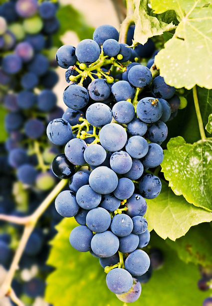 grapes-3623694.jpg