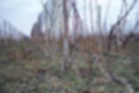 DSCF0434.jpg
