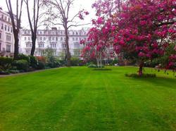 garden_square_cornwall_summer