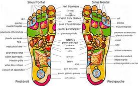 zones_réflexologiques_des_pieds.jpg