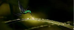 La part du colibri.jpg