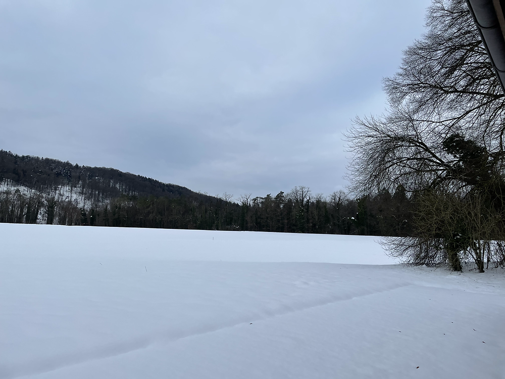 pasture for the alpacas covered in snow