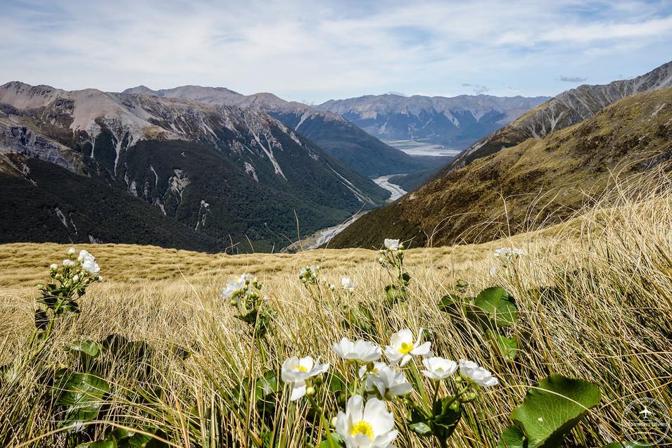 NZ - Arthur pass