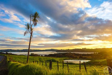 NZ - Pahi
