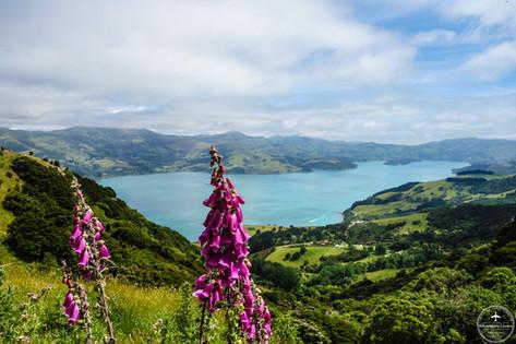 NZ - Banks peninsula