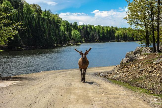 Québec - Park Omega