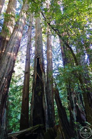 California - Big Basin NP