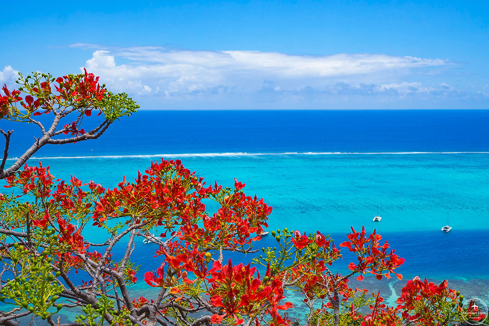 Polynésie - Moorea