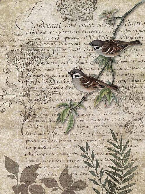 Birds on a Branch - DQRP_0089