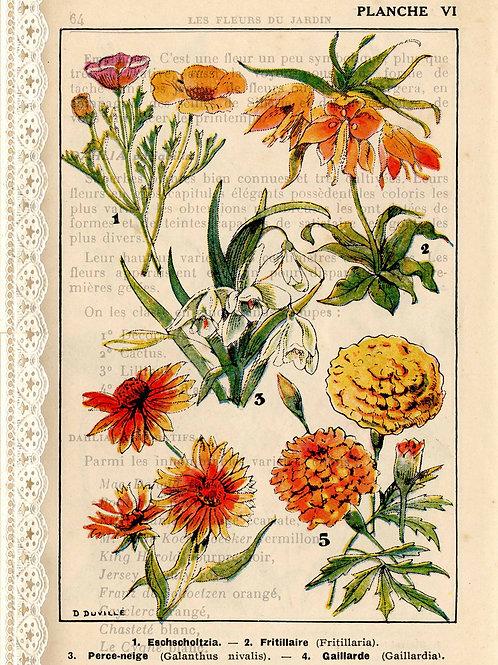 French Botanicals I