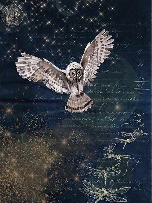 Karin's Night Owl - DQRP_0094