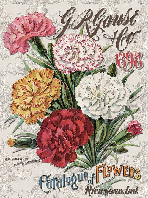 Carnation Catalog - DQRP_0103