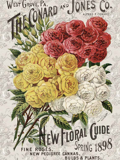 Roses Catalog - DQRP_0104