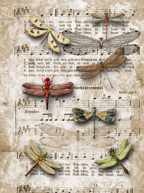 Dragonflies on SheetMusic