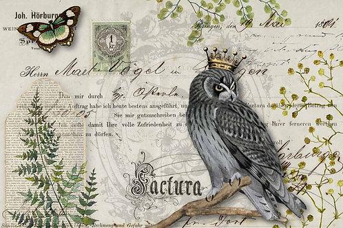 Owl Botanicals - DQRP_0092