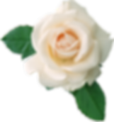 white-roses-png-white-rose-png-image-flo