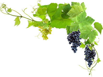 transparent-grapes-plant-png-13.png