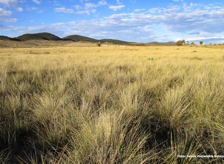 Iniciativa conjunta en la conservación de los pastizales ante el cambio climático