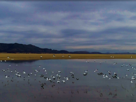 'Perspectivas: La Laguna de Santiaguillo' es un fiel retrato de Durango
