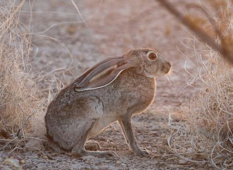 Artículo: Enfermedad hemorrágica viral de los conejos y liebres, subtipo 2 (EHVC– 2)