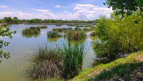 La importancia de los humedales, acciones de conservación en Meoqui, Chihuahua.