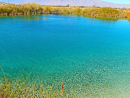 Restauración del Humedal en el Área de Protección de Flora y Fauna Cuatro Ciénegas