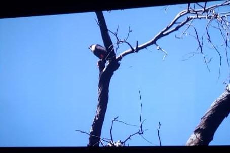 ¡Todo un éxito la proyección de 'En Busca del Águila Elegante' en la Cineteca NL!